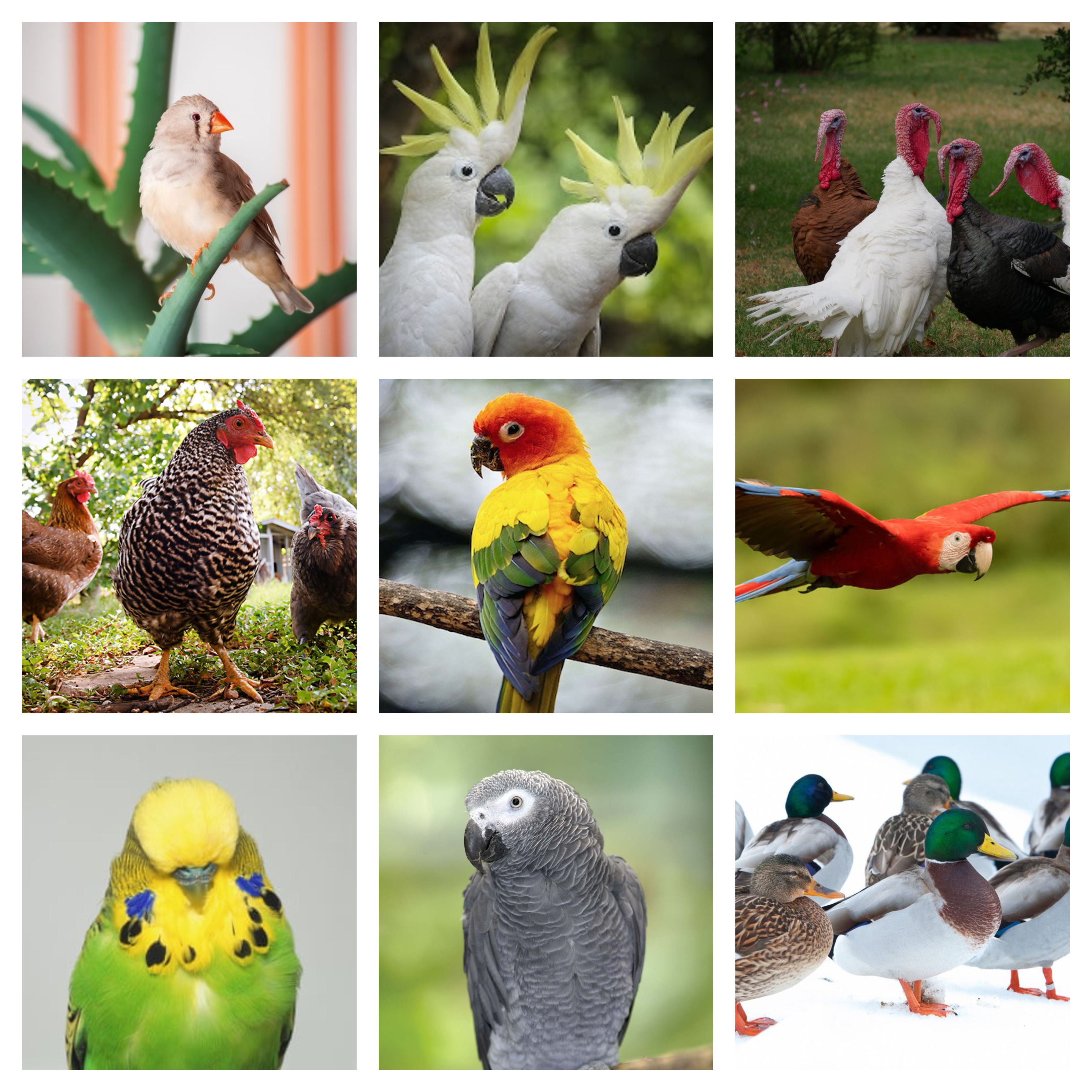 avian collage